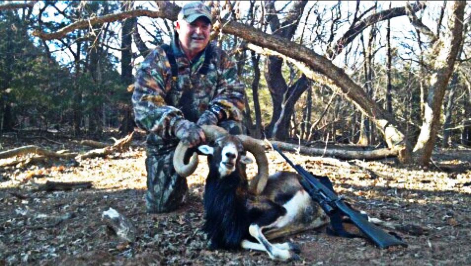 Trophy Mouflon Hunts