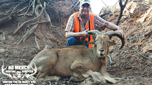 Guided Aoudad Hunts