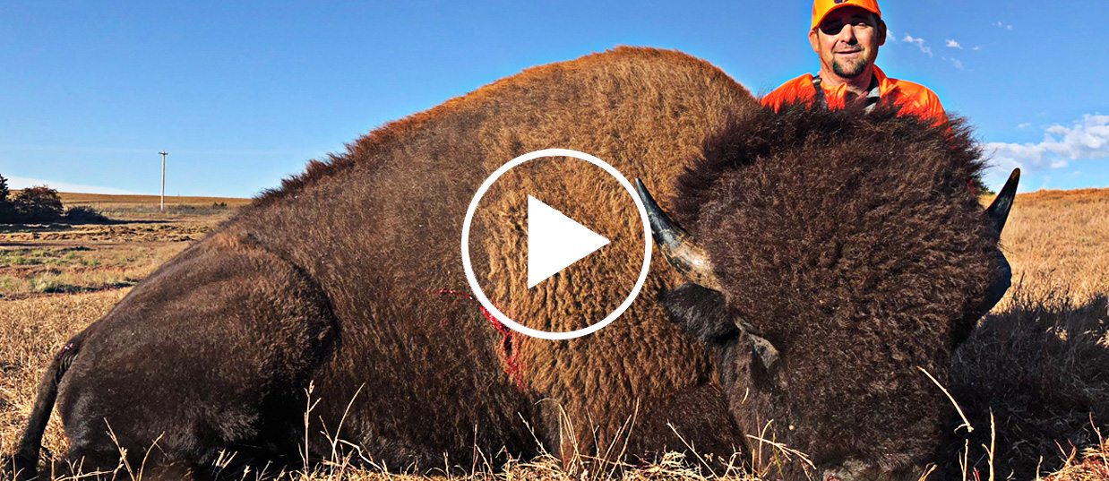 Buffalo Bull Bison Hunts